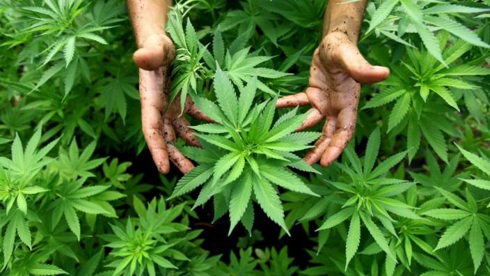 Linke fordern Cannabis-Clubs
