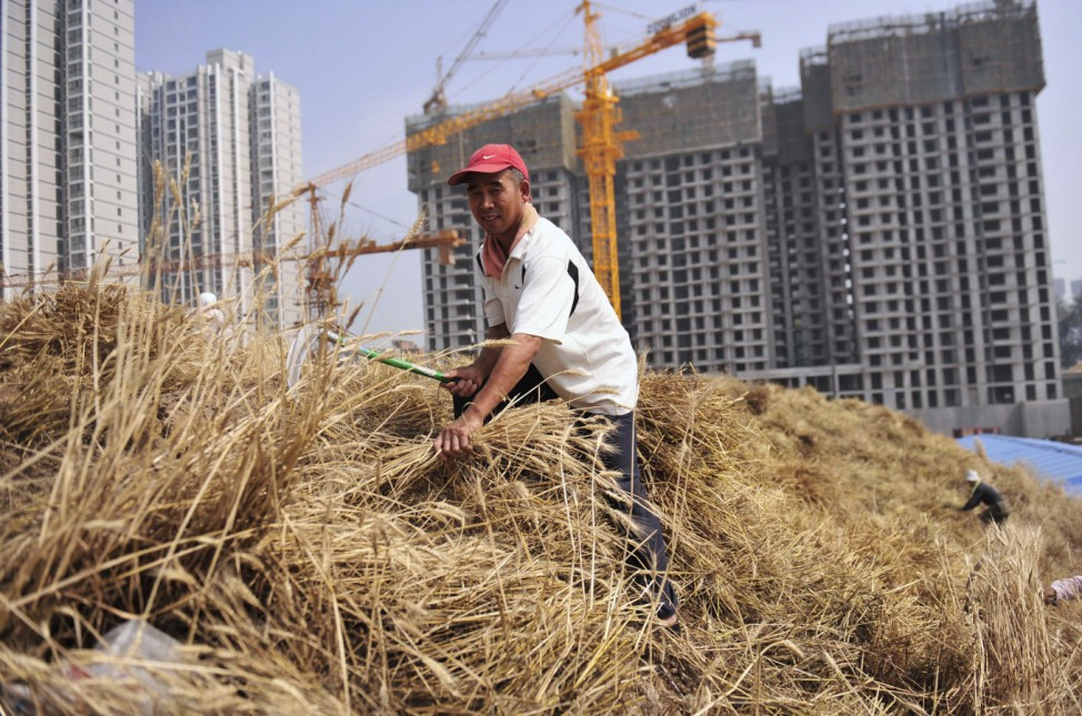 A man harvests wheat on a farm near a construction site in Xi'an