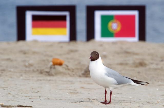 Möwen orakeln für Fußball-EM