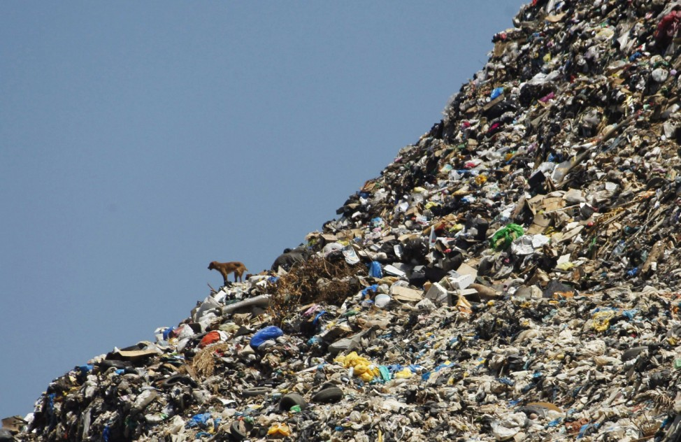 A stray dog stands on a rubbish dump at the seafront in Sidon