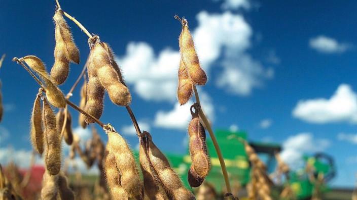 Soja-Pflanzen Anbau in Brasilien