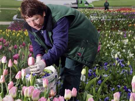Gärtnerin, Tulpen, Garten, AP