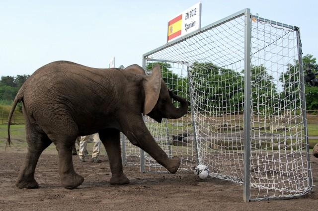 Elefantendame Nelly schiesst Italien zum Titel