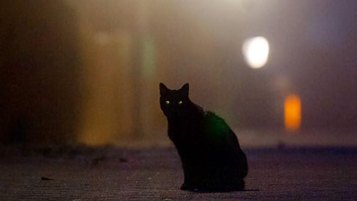 Katze vor Straßenlaternen