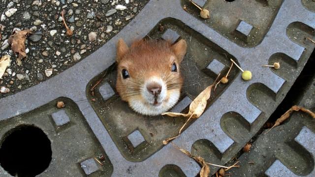 Polizei rettet Eichhörnchen