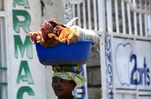 A woman carries live chickens on her head as she sells them along a street in Goma