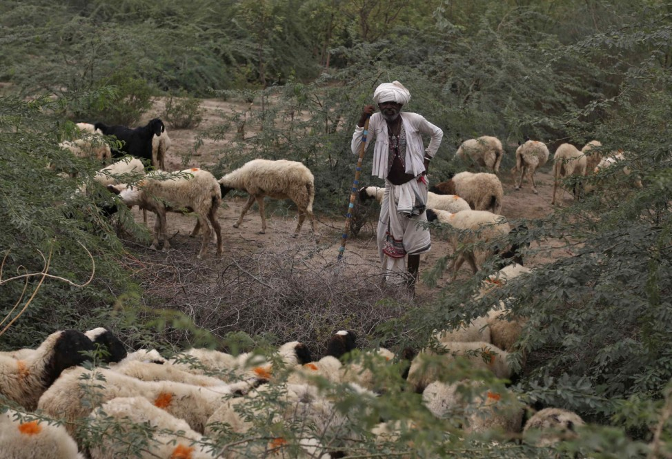 Villager migrates with his sheeps due to lack of water at Kuraga village