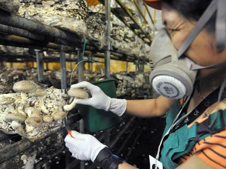 Rein in die Bude, Hobbys für drinnen, Pilze züchten, Foto: dpa