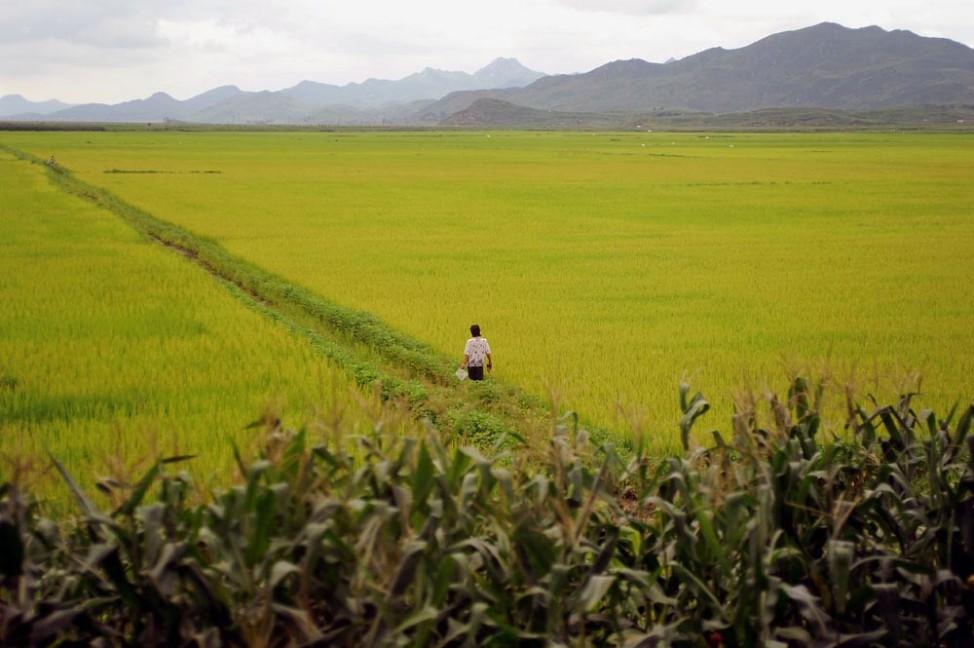 Bildstrecke aus Nordkorea von Olaf Schuelke