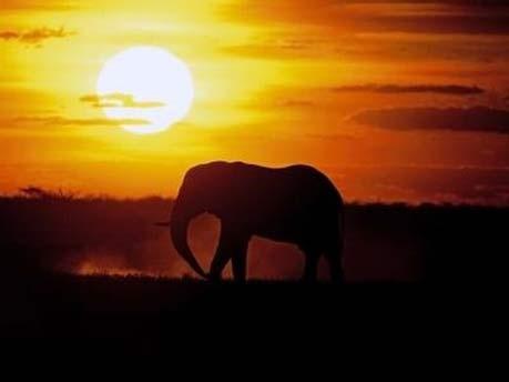 Afrika Südafrika Safari, South African Tourism/dpa