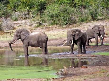 Afrika Südafrika Safari, Burmeister/dpa