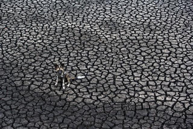 Dog days,wildlife photographer of the year