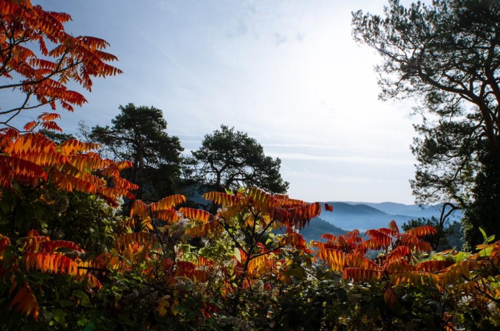 Leser-Foto Herbst Deutschland Pfalz Dahner Felsenland