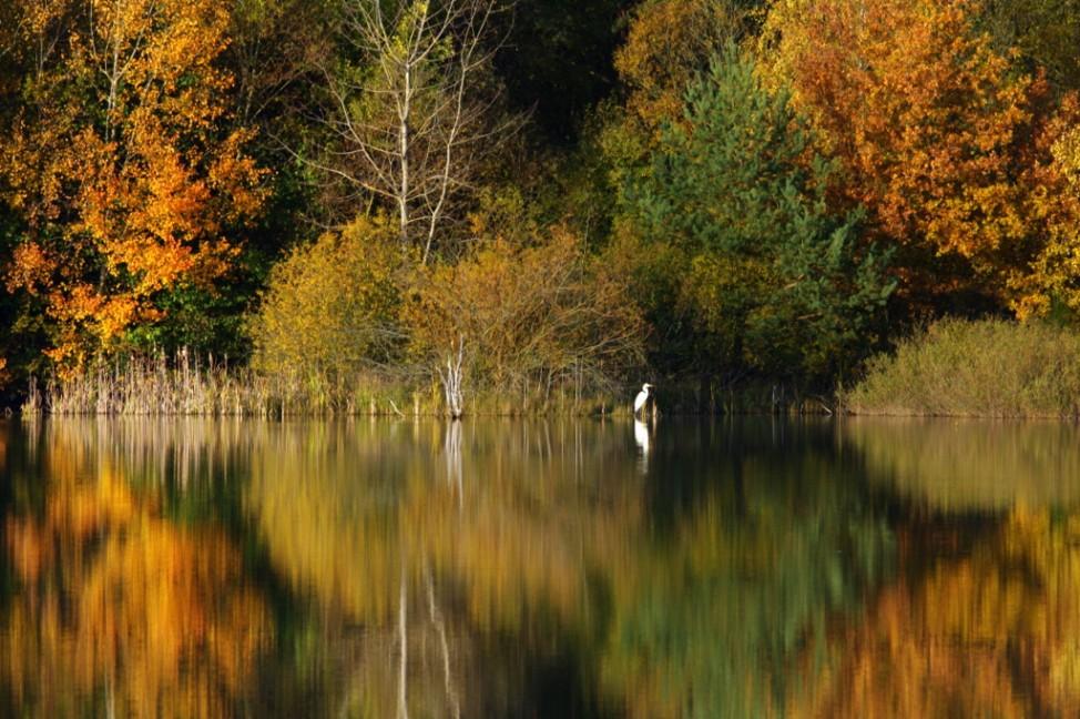 Leser-Foto Herbst Deutschland Binsfeld Eifel