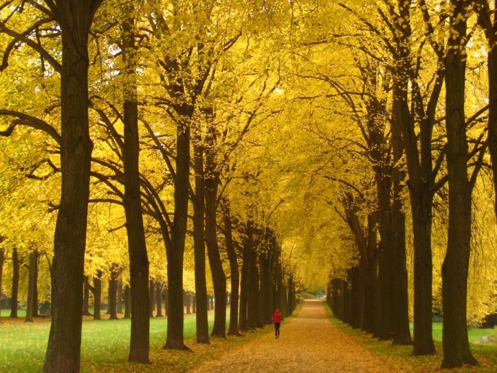 Leser-Foto Herbst Deutschland Schloss Sanssouci Potsdam