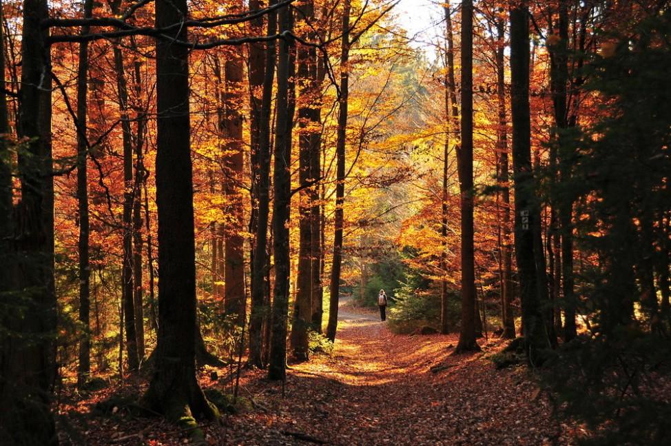 Leser-Foto Herbst Deutschland Nationalpark Bayerischer Wald