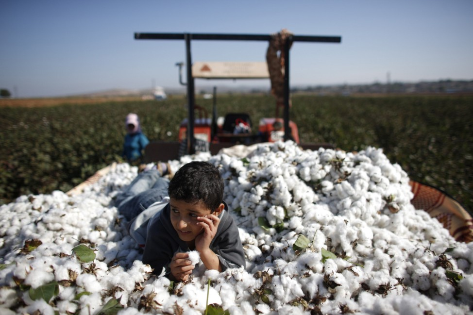 Moayed, a 9-year old Syrian refugee boy, lies over cotton clumps as the other Syrians work in a cotton field in the village of Bukulmez