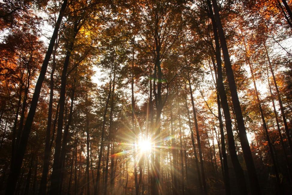 Sonne strahlt im herbstlichen Wald