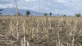 Feld, verödet, AFP