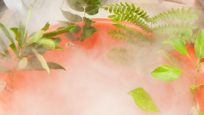 Pflanzen trinken Wasser aus Nebel