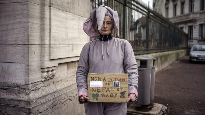 Elefant, Tötung, Tuberkulose, Lyon, Frankreich
