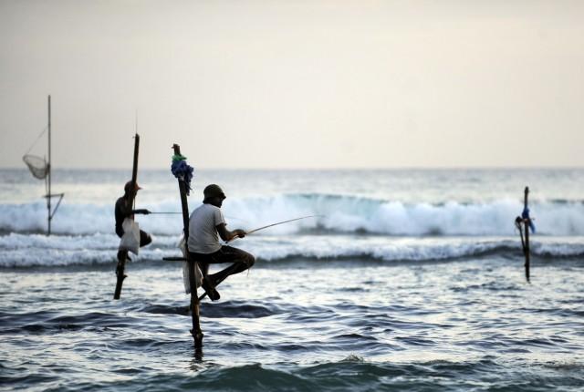 Stockfischer in Matara auf Sri Lanka