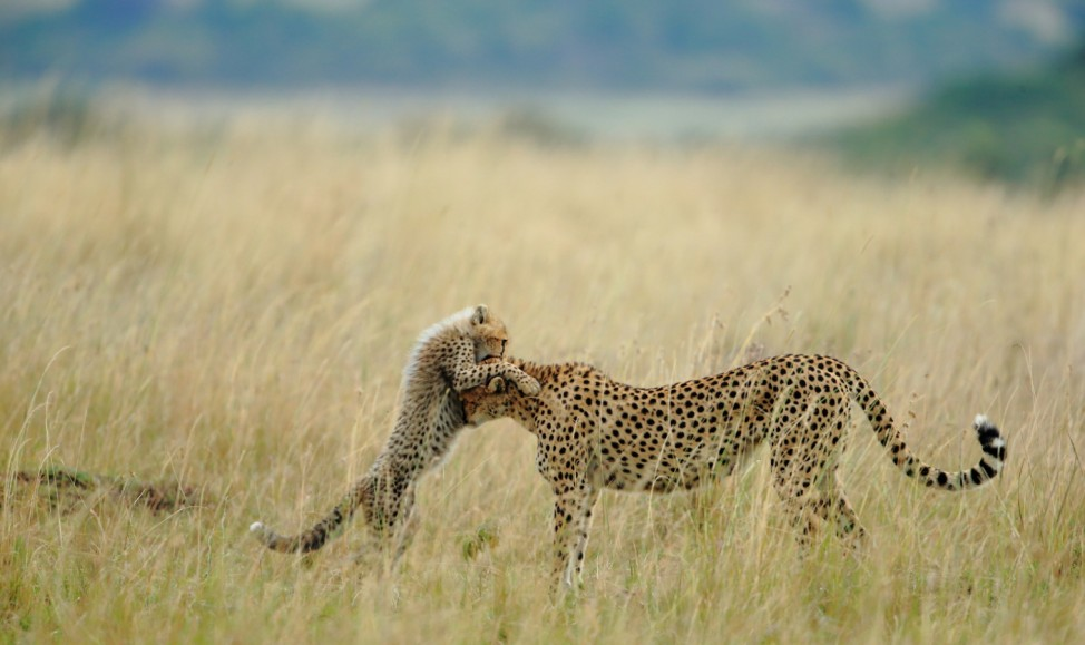 National Geographic Photo Contest 2012 - Tender Moment