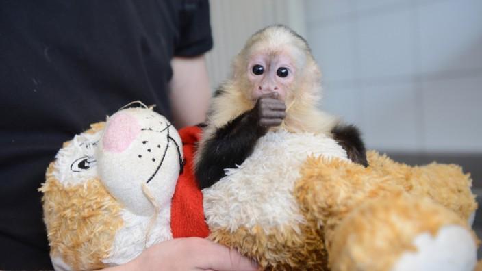 Justin Biebers Affe im Tierheim München-Riem
