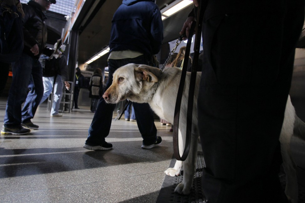 Miller, a Transit Police dog, watches commuters at Back Bay Station a day after two explosions in Boston