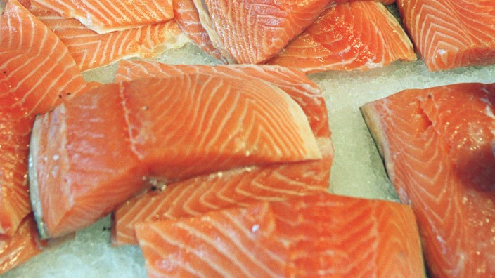 Lachs Fisch Lebensmittel