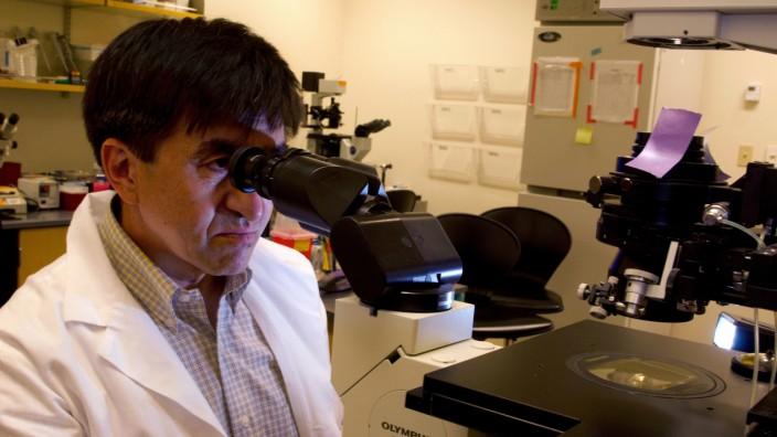 Shoukrat Mitalipov, Leiter der Forschungsgruppe in Oregon, am Mikroskop