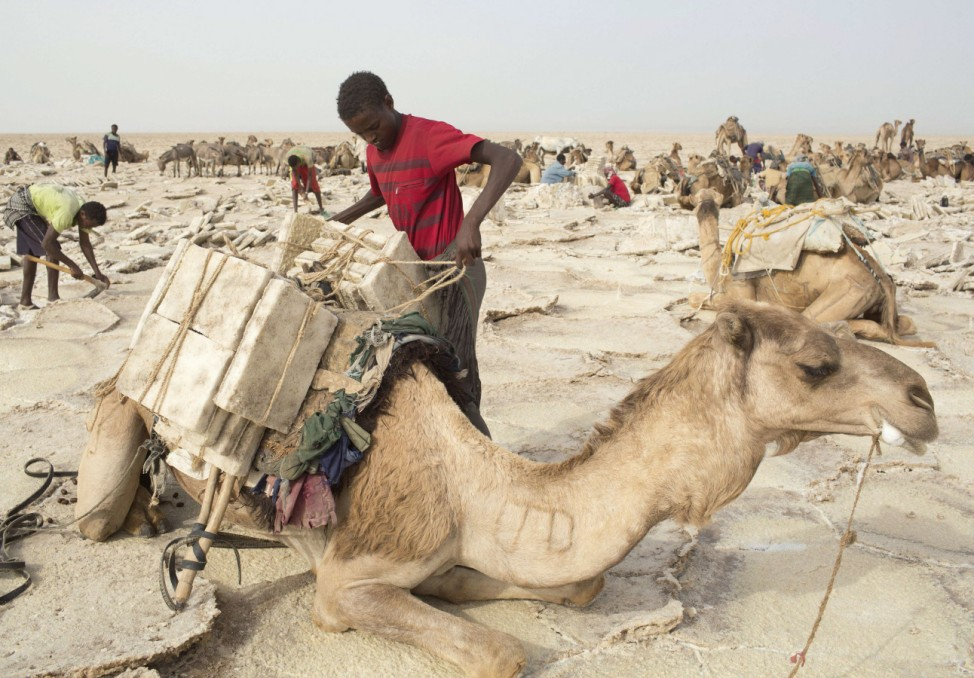 A worker loads a camel with slabs of salt in the Danakil Depression, northern Ethiopia