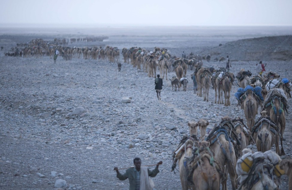 At dawn, a camel caravan starts its journey to the Danakil Depression in northern Ethiopia
