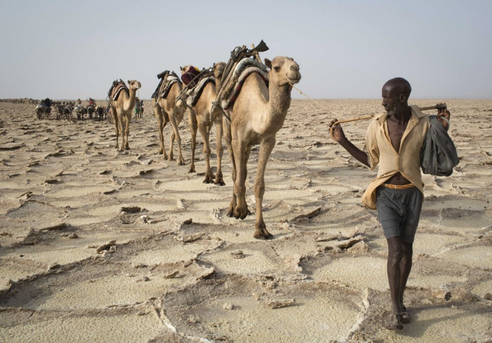 A man walks with his camels through the Danakil Depression, northern Ethiopia