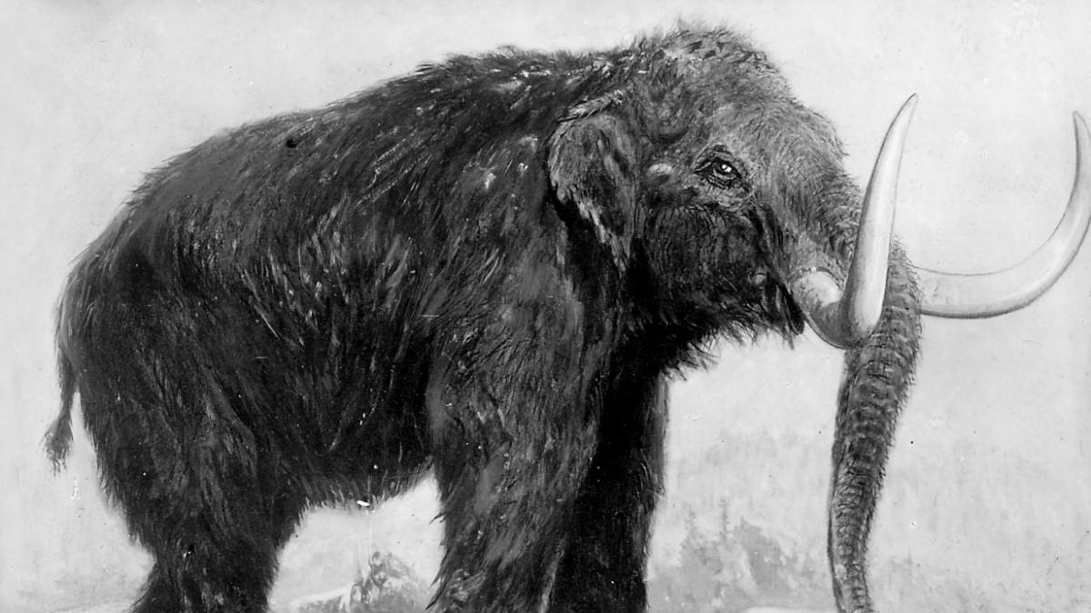 Mammut klonen
