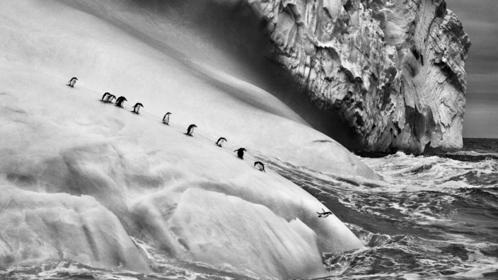 Sebastião Salgado: Pinguine in der Antarktis.
