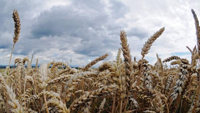Trübe Erntebilanz der Bauern in Nordbayern