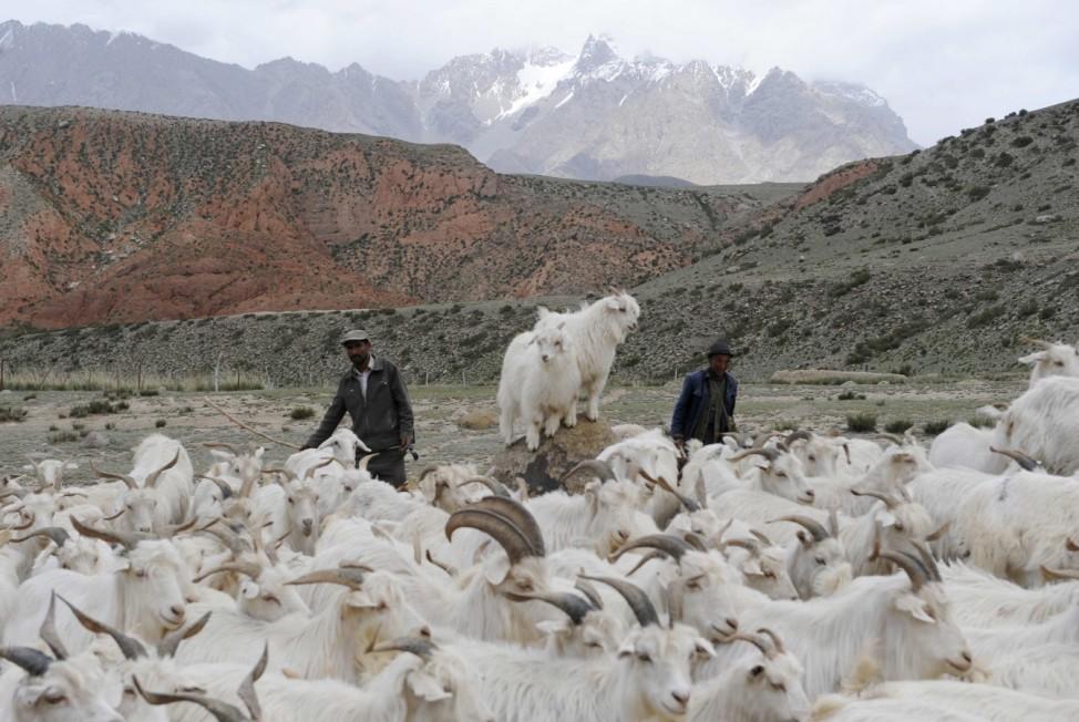 Ethnic Kyrgyz shepherds herd goats in the Tianshan mountains in Wensu county