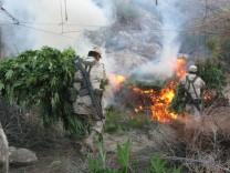 Marihuana in Mexiko: Alles dreht sich