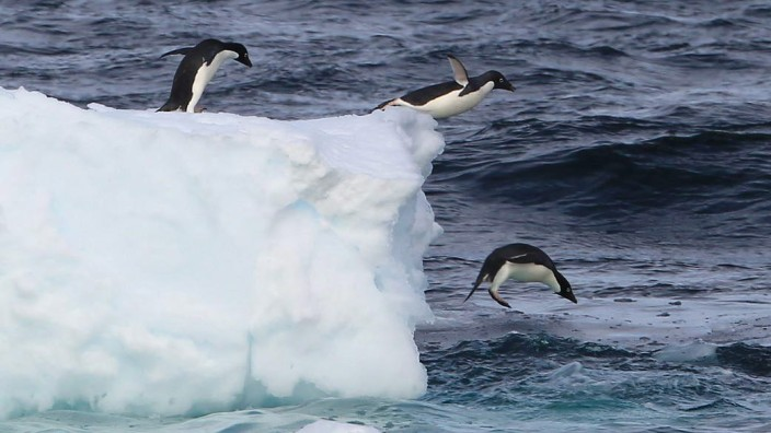 Schutzzone Antarktis Südpol