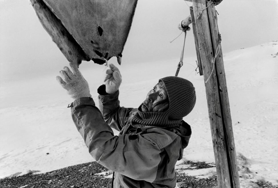 Grönland Seehundfelle