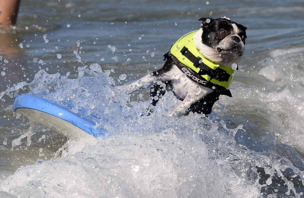 Fifth Annual Surf City Surf Dog competition