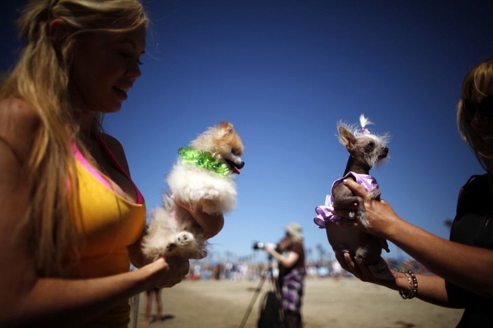 Women hold their dogs at the beach during the Surf City surf dog competition in Huntington Beach