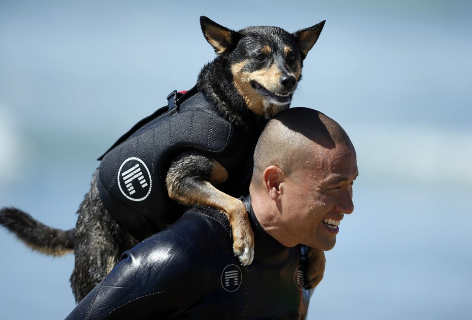 A man carries his dog on his back during the Surf City surf dog competition in Huntington Beach