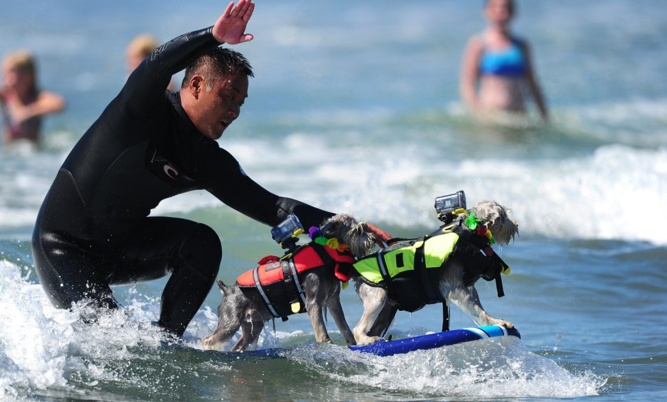US-SURFING-DOGS