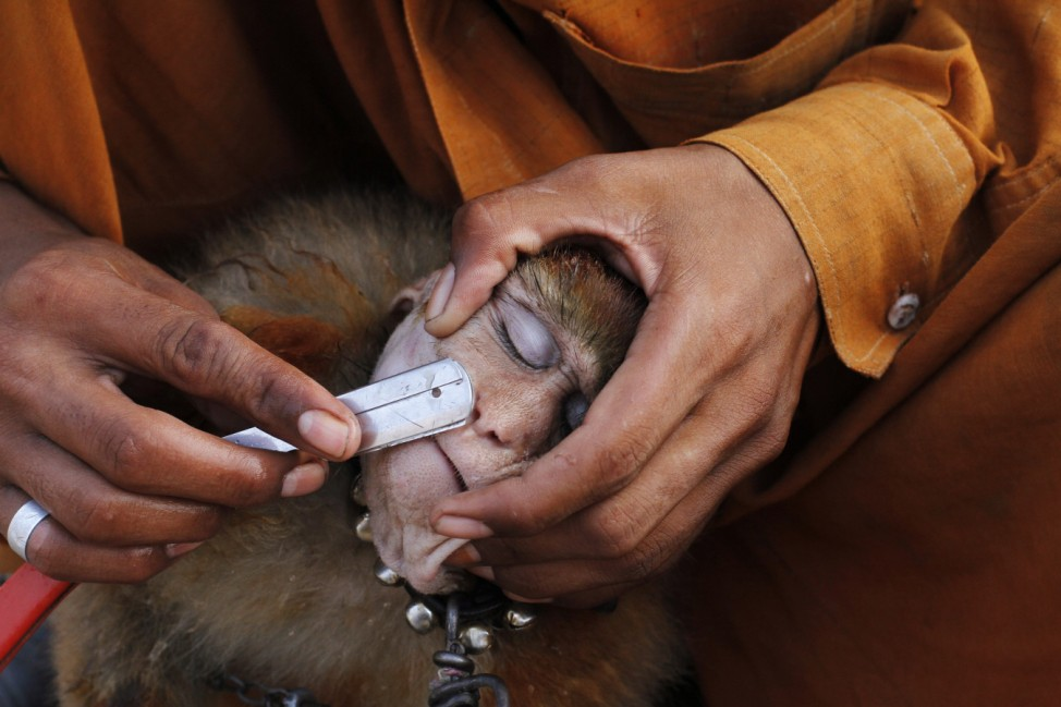 A man shaves his monkey with a razor before it performs tricks for money in Lahore
