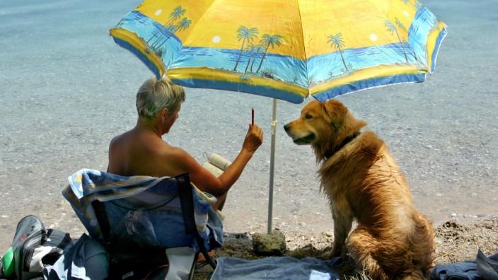 Sommerwetter - Hund unter Sonnenschirm