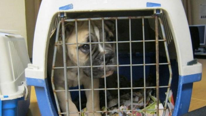 Illegaler Hundehandel