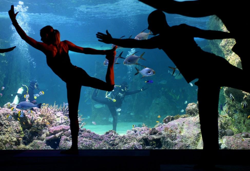 Coga class from inside the Great Barrier Reef oceanarium