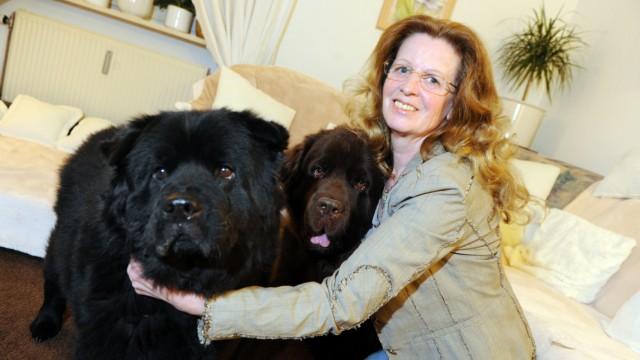 Im Beruf hat sie mehr mit Katzen zu tun, dennoch ist Eveline Kosenbach übervorsichtig im Umgang mit ihren Hunden Danka (links) und Shadow.